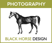 Black Horse Design Photography (Merseyside Horse)